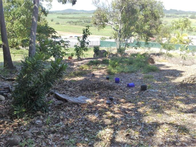 garden-january-2012-019